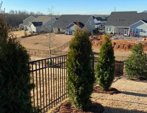 Emerald Green Arborvitae – Outdoor Living Tip of the Day