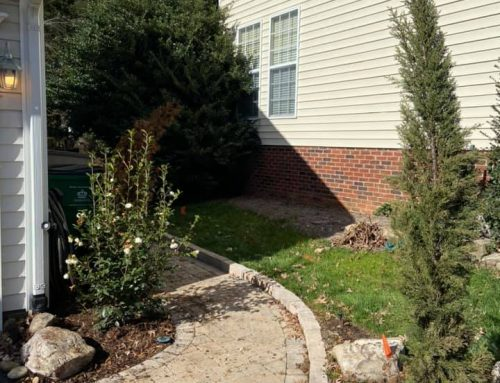 Italian Cypress Tree – Outdoor Living Tip of the Day