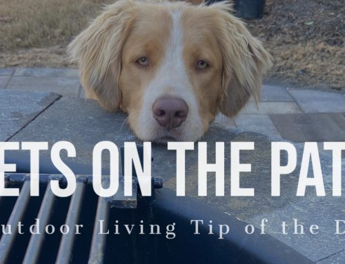 Pets on the Patio – Outdoor Living Tip of the Day